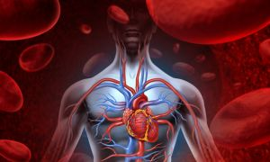 Identification of Novel Cardiovascular Disease Pathways, Biomarkers